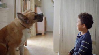 Clorox TV Spot, 'Pet Playtime' - 1679 commercial airings