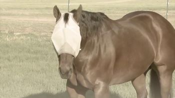 Cashel Company Crusader Fly Mask TV Spot, 'Every Horse Is Different' - Thumbnail 6