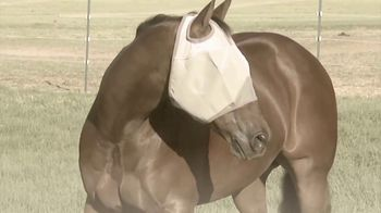 Cashel Company Crusader Fly Mask TV Spot, 'Every Horse Is Different' - Thumbnail 7