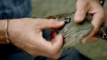 BTN LiveBIG TV Spot, 'Why Indiana Is Putting Backpacks on Birds' - Thumbnail 1