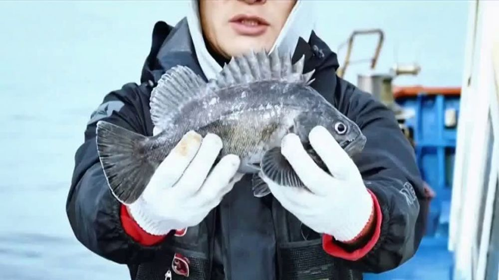 Deeper Sonar Portable Fish Finder TV Commercial, 'Catch Them All' Song by Mogli the Iceburg