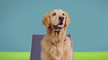 JCPenney Dog Days of Summer Sale TV Spot, 'Fetch Shorts and Towels' - Thumbnail 2