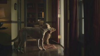 Subaru TV Spot, 'Dog Tested: Scram' [T1] - Thumbnail 6