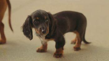 Subaru Crosstrek TV Spot, 'Dog Tested: Lunch Stop' [T1] - Thumbnail 7