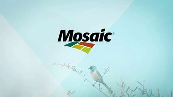 Mosaic TV Spot, 'Scrub Jay Preservation' - Thumbnail 7