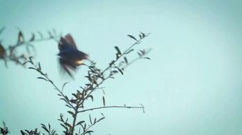 Mosaic TV Spot, 'Scrub Jay Preservation'