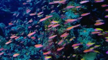 Sherwin-Williams TV Spot, 'Shark Week: Color Inspiration' - Thumbnail 2