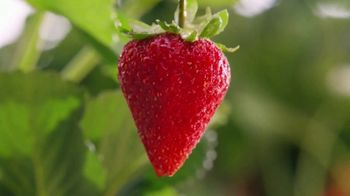 Panera Bread TV Spot, 'Strawberry Season' - Thumbnail 4