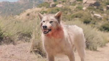 Yahoo! Sports Daily Fantasy TV Spot, 'Wolf: Play for Free' - Thumbnail 6