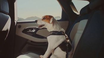 2020 Range Rover Evoque TV Spot, 'A Dog's Dream' Song by Dom James [T1] - Thumbnail 5