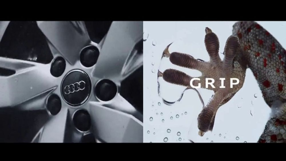 Audi Q5 TV Commercial, 'Reptile' [T2]