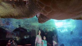 SeaWorld TV Spot, 'All That's New' - Thumbnail 2
