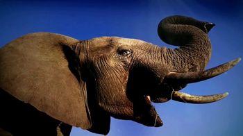 World Wildlife Fund TV Spot, 'Elephants'