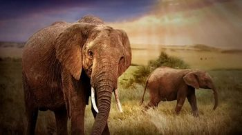 World Wildlife Fund TV Spot, 'Elephants' - Thumbnail 1
