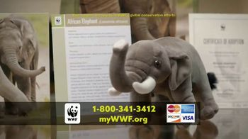 World Wildlife Fund TV Spot, 'Elephants' - Thumbnail 9