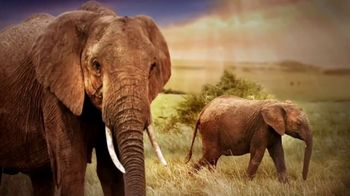 World Wildlife Fund TV Spot, 'Elephants' - Thumbnail 2