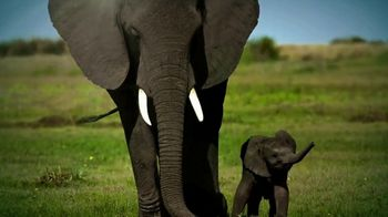 World Wildlife Fund TV Spot, 'Elephants' - Thumbnail 3