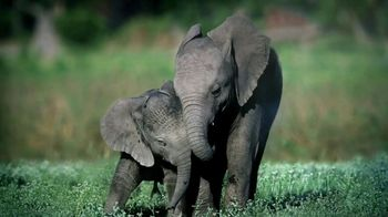 World Wildlife Fund TV Spot, 'Elephants' - Thumbnail 5