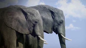 World Wildlife Fund TV Spot, 'Elephants' - Thumbnail 6