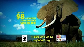 World Wildlife Fund TV Spot, 'Elephants' - Thumbnail 7