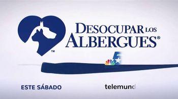 Clear the Shelters TV Spot, 'Telemundo 39: Desocupar los albergues' [Spanish] - Thumbnail 10