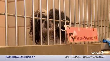 Clear the Shelters TV Spot, 'NBC 3 Cleveland: Find Your Best Friend' - Thumbnail 7
