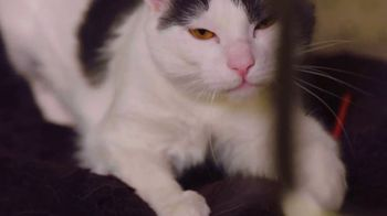 Clear the Shelters TV Spot, 'NBC 11: Cat's Pride' - Thumbnail 2