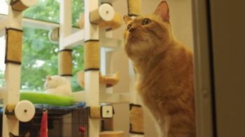 Clear the Shelters TV Spot, 'NBC 11: Cat's Pride' - Thumbnail 6