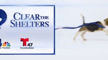 Clear the Shelters TV Spot, 'NBC 4 New York: Together' - Thumbnail 10