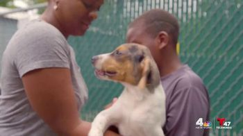 Clear the Shelters TV Spot, 'NBC 4 New York: Together' - Thumbnail 7