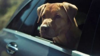 Mercedes-Benz Summer Event TV Spot, 'Rescue' Song by Layup [T2]