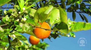 Florida Orange Juice TV Spot, 'Coming Right up' - Thumbnail 8