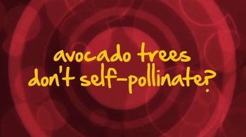 Avocados From Peru TV Spot, 'Self-Pollinate' - Thumbnail 3