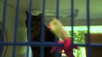 Mars Petcare Better Cities for Pets TV Spot, 'A Better World for Pets' - Thumbnail 6