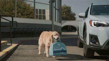 Subaru TV Spot,  'Dog Tested: Drive Away: Complimentary Maintenance' [T2] - Thumbnail 3