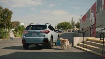 Subaru TV Spot,  'Dog Tested: Drive Away: Complimentary Maintenance' [T2] - Thumbnail 4