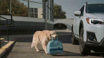 Subaru TV Spot,  'Dog Tested: Drive Away: Complimentary Maintenance' [T2] - Thumbnail 5