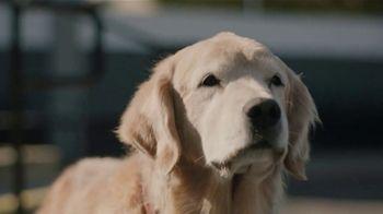 Subaru TV Spot,  'Dog Tested: Drive Away: Complimentary Maintenance' [T2] - Thumbnail 6