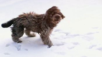Dog Diaries: Happy Howlidays thumbnail