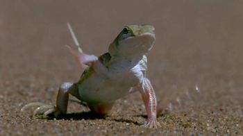 Esurance TV Spot, 'Dollars: Talking Lizard' - Thumbnail 5