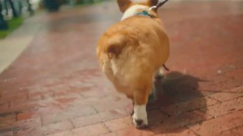 Airbnb Experiences TV Spot, 'Introducing Animals' Song by Doris Day - Thumbnail 3