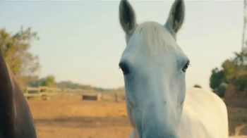 Airbnb Experiences TV Spot, 'Introducing Animals' Song by Doris Day - Thumbnail 7
