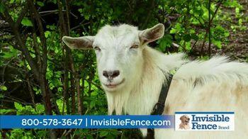 Invisible Fence TV Spot, 'Sound Snapshot: Animals' - Thumbnail 4