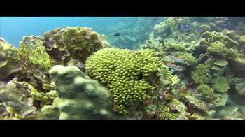 Big Ten Network TV Spot, 'Coral Skeleton' - Thumbnail 6