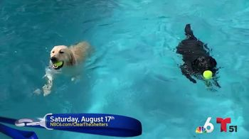 Clear the Shelters TV Spot, 'NBC 6 Miami: Bring a Best Friend Home' - Thumbnail 1