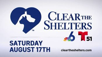 Clear the Shelters TV Spot, 'NBC 6 Miami: Bring a Best Friend Home' - Thumbnail 10