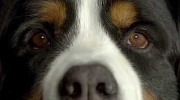 Crave Pet Food TV Spot, 'Vegan Pets Are Not A Thing' Song by Biker Bar - Thumbnail 6