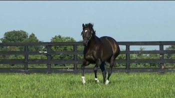 WinStar Farm, LLC TV Spot, 'Always Dreaming: Athleticism' - Thumbnail 4