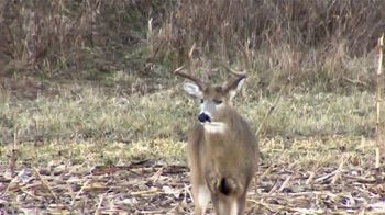 Wildlife Research Center Super Charged Scent Killer TV Spot, 'Deer Noses' - Thumbnail 3