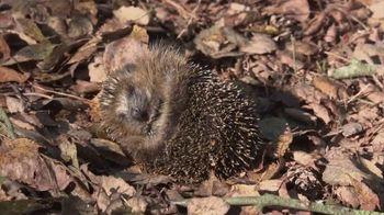 Parachute Home TV Spot, 'Happy Hibernating'